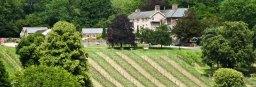 ancre hill vinyard