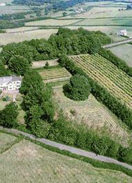 crofta vine yard