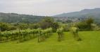 Pant-Du-Vineyard-North-Wales
