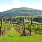 the-sugarloaf-vineyard