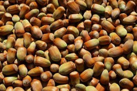 hazelnuts_fruit_a_collection_of_mature_food_the_cultivation_of_natural_fresh-1066263