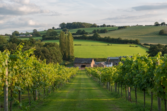 Welsh Wine, yes Welsh wine at it's best – and itsdelicious!