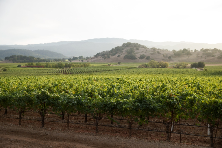 PerUs_Vineyard by David Peterson_2